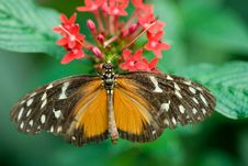 Free Beautiful Butterfly Stock Photography - 3204192