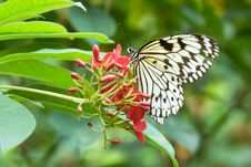 Free Beautiful Butterfly Stock Photo - 3204200