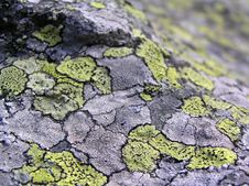 Free Lichen Stone Texture - DOF Royalty Free Stock Photos - 3204848
