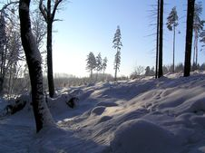 Free Forest In Winter Stock Photography - 3204952