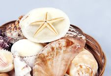 Free Shells And Starfish Royalty Free Stock Photography - 3205457