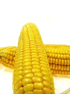 Free Isolated Ear Of Corn Stock Image - 3205521
