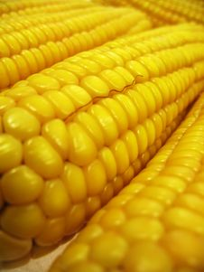 Texture Of Ears Of Corn Royalty Free Stock Photos