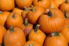 Free Pumpkins In A Pile Stock Photo - 3206090
