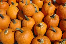 Free Pumpkins In A Pile Stock Photos - 3206093