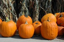 Free Pumpkins With Dry Corn Plants Royalty Free Stock Images - 3206099