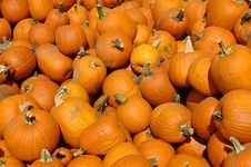 Free Pumpkins On A Pile Royalty Free Stock Image - 3206106