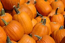 Free Pumpkins On A Pile Royalty Free Stock Photos - 3206108