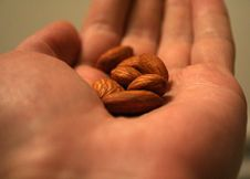 Free Almond Nuts On A Palm Stock Image - 3207681
