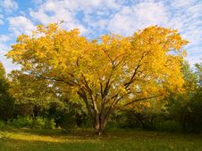 Free Yellow Tree Stock Image - 3207731