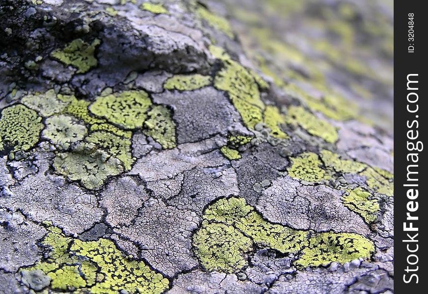 Lichen stone texture - DOF