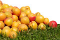 Free Apricots Stock Images - 32008394