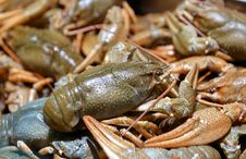 Free Live Crayfish Stock Images - 32004034