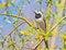 Free White Wagtail Closeup Stock Image - 32004371