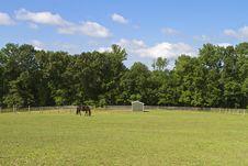 Free Summer Grazer Stock Image - 32013651