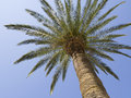 Free Palm Tree Stock Photos - 32020843
