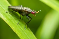 Free Portrait Of A Horse-fly Stock Photo - 32020240