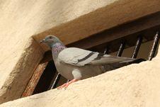 Free Bird On The Window Royalty Free Stock Photography - 32025207