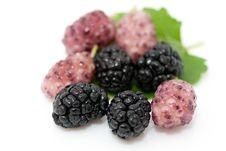 Ripe Organic Mulberries Stock Images