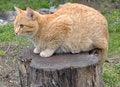 Free Cute Cat Cartoon Royalty Free Stock Photos - 32049438
