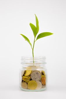 Free Plant And Coins In Glass Jar Stock Photo - 32042560