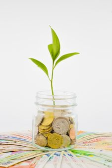 Free Plant And Coins In Glass Jar Stock Photos - 32042583
