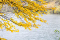 Free Tree Autumn Vs. Winter Royalty Free Stock Photo - 32050105