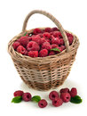 Free Fresh Sweet Raspberries In A Wicker Basket Royalty Free Stock Photography - 32055787