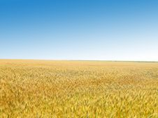 Free Golden Wheat Field Against The Sky Stock Image - 32051231