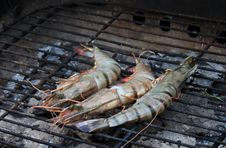 Free Cooking Tiger Prawns Grilled. Royalty Free Stock Images - 32051489