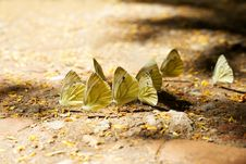 Free Beautiful Butterflies Royalty Free Stock Photos - 32056968