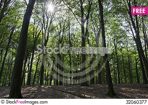 Free Sun Shining In The Forest Royalty Free Stock Photography - 32060377