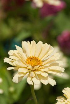 Free Cream Flora Stock Image - 32070121