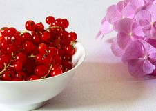 Free Red Currants In A Bowl Stock Photos - 32085123