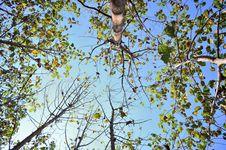 Free Teak Forest Royalty Free Stock Image - 32085286