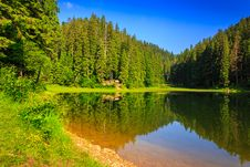 Pine Forest And Lake Early In The Morning Royalty Free Stock Photos