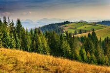 Free Coniferous Forest Autumn Mountain Royalty Free Stock Photo - 32085315