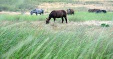 Free Horses Stock Photos - 32088773