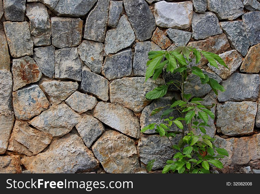 Trees and stone