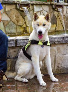 Free Rescue Dog Royalty Free Stock Photo - 32093245