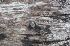 Free Tree Bark Stock Photography - 32098542