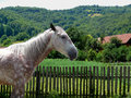 Free Tranquil Horse Royalty Free Stock Image - 3210976