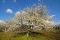 Free Garden Stock Photography - 3212292