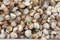 Free Fresh Shellfish For Sale Royalty Free Stock Images - 3214909