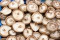 Free Mushrooms Stock Photography - 3214912