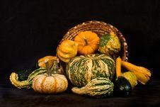 Free Pumpkins Stock Image - 3210311