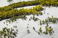 Free Yellow Dune Flowers Stock Photography - 3210562