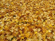 Free Yellow Leaves Stock Photo - 3211410