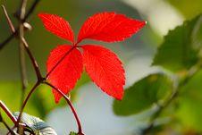 Free Garden Royalty Free Stock Image - 3212256