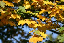 Free Autumn Royalty Free Stock Images - 3212849